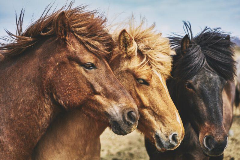 Smakołyki dla koni